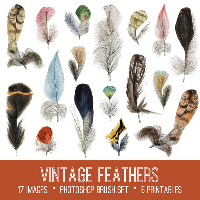 Vintage Feathers Image Kit