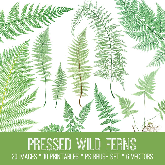 Pressed Wild Ferns Image Kit