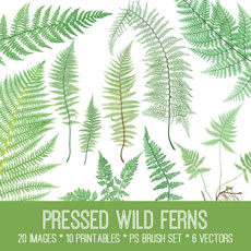 Pressed Wild Ferns Image Kit! Graphics Fairy Premium Membership Site
