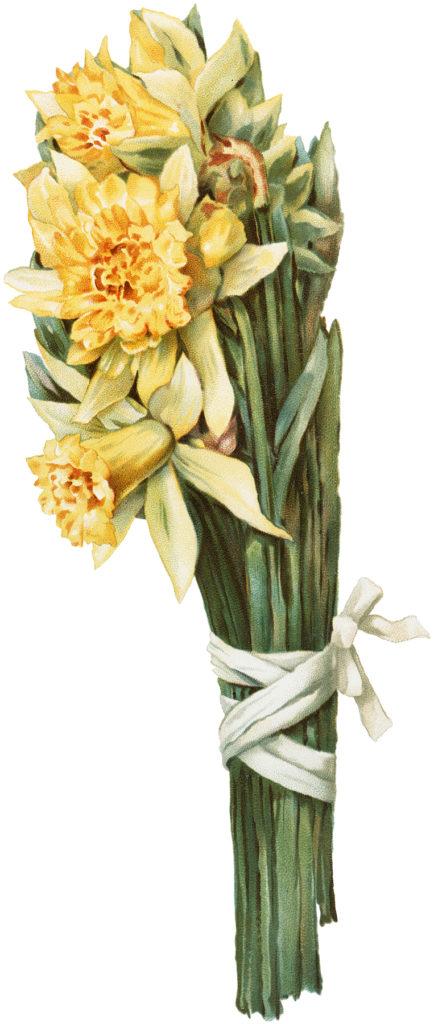 Vintage Daffodils Image