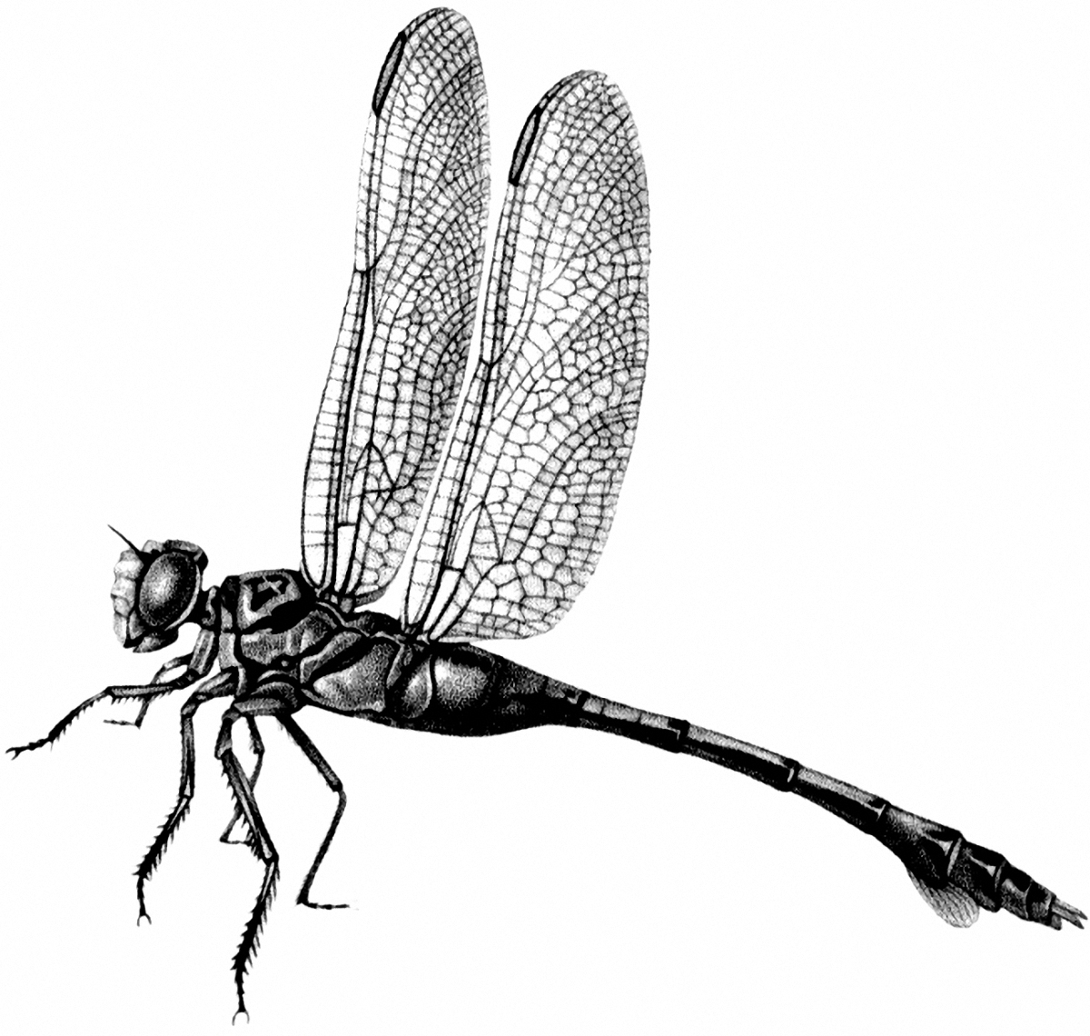 Vintage Dragonfly Image - Black and White! - The Graphics Fairy