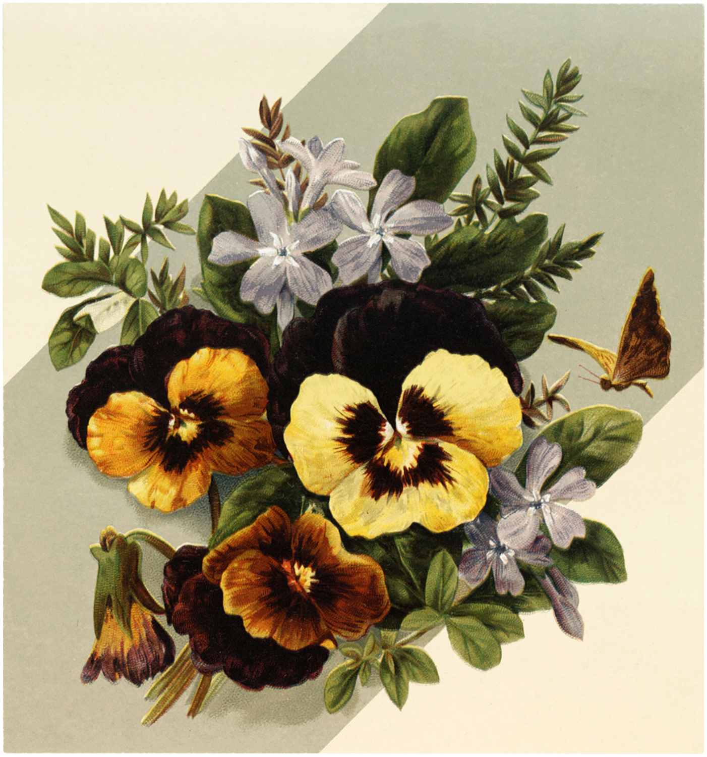 Vintage Pansy Picture