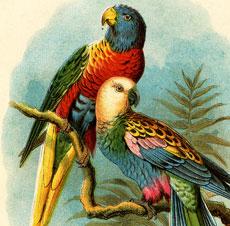 Beautiful Vintage Parrots Picture!