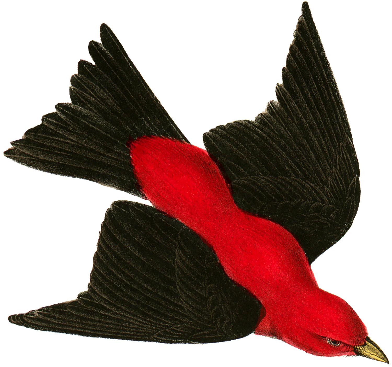 Vintage Red Bird Image