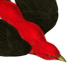 Gorgeous Vintage Red Bird Image!