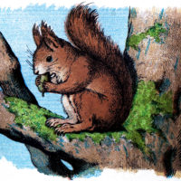 Vintage Squirrel Download