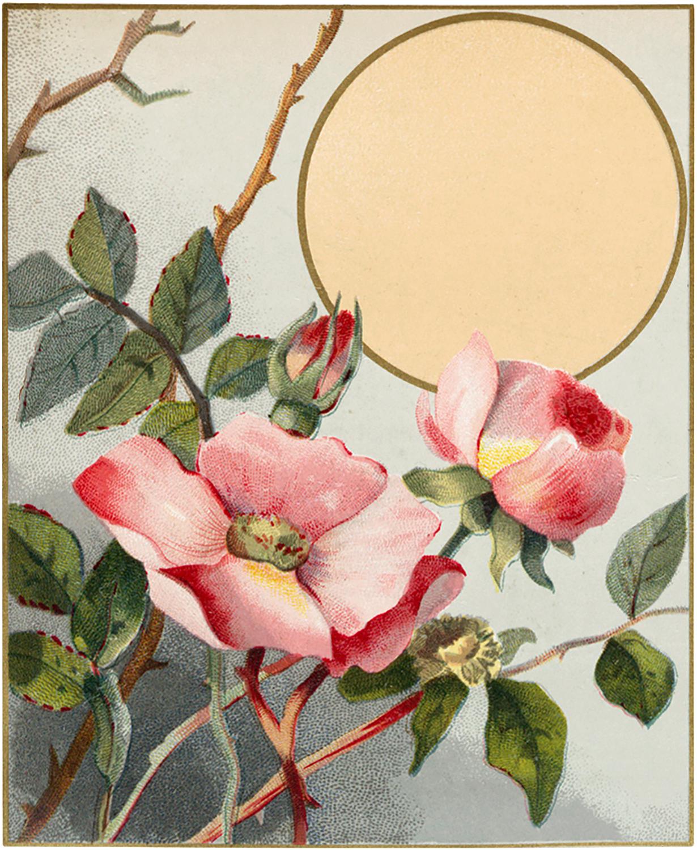 Free Wild Roses Clip Art