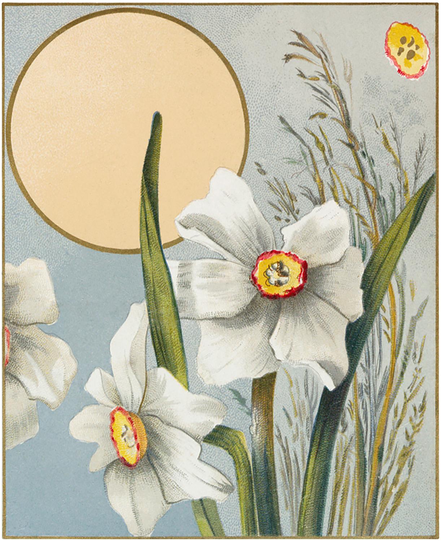 Vintage Daffodil Label
