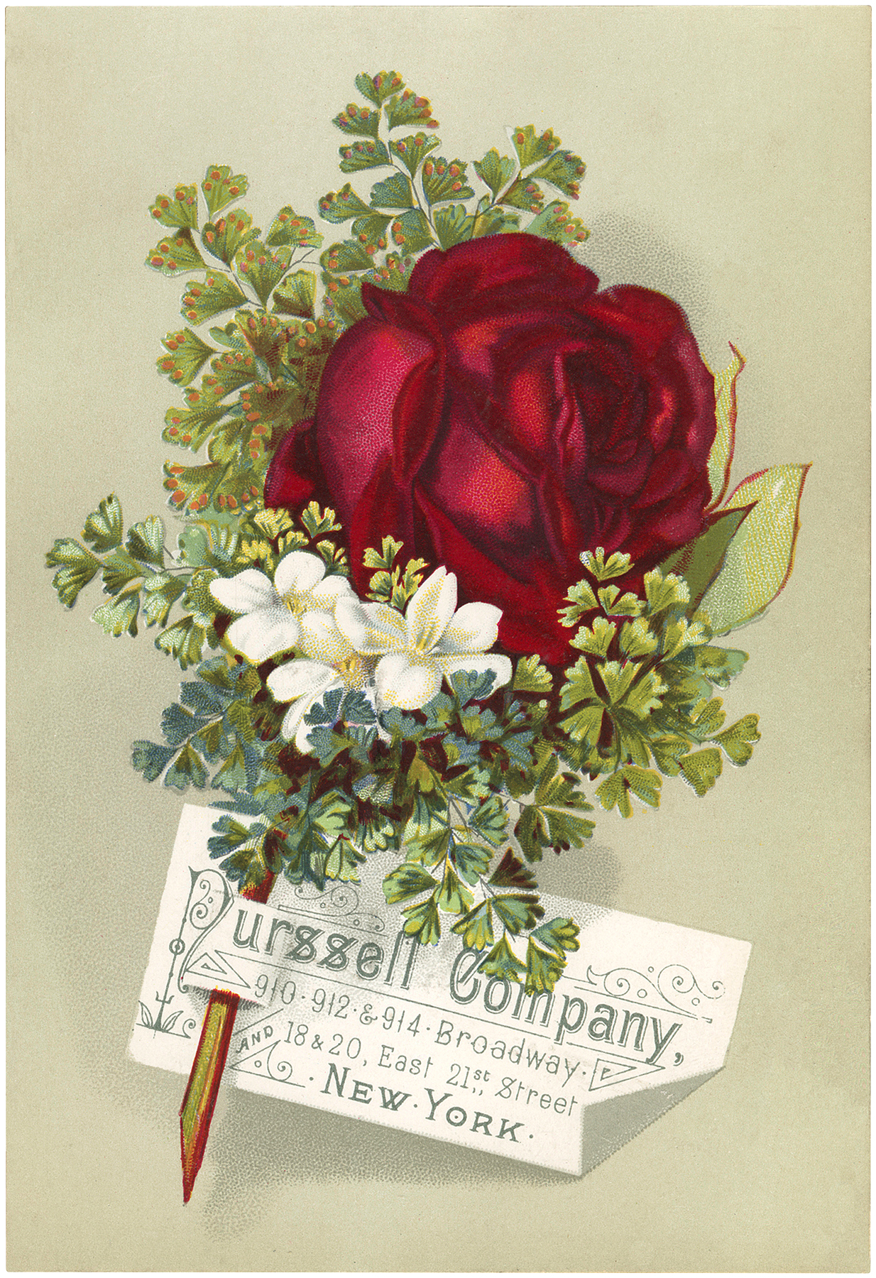 Vintage Rose Advertisement