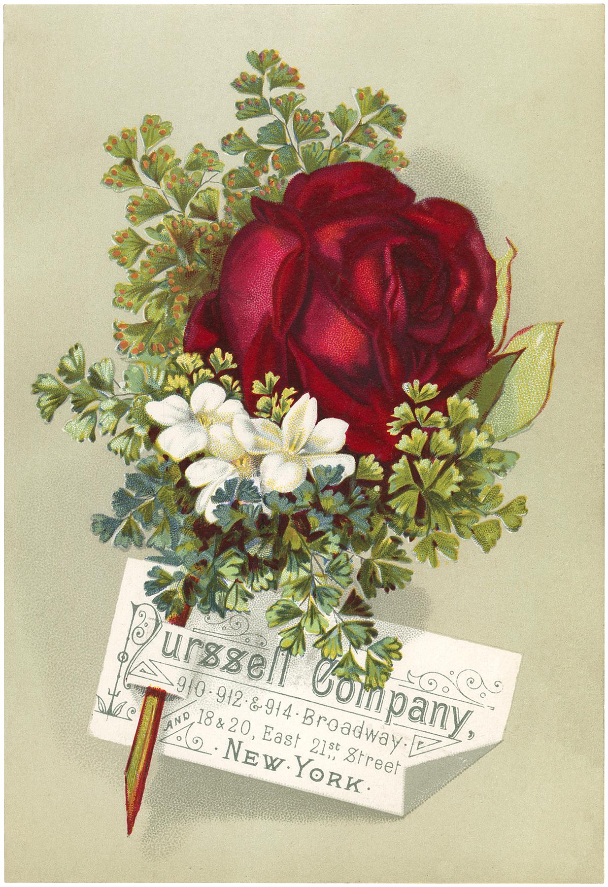 Vintage Rose Advertisement
