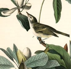 Gorgeous Natural History Bird Printable