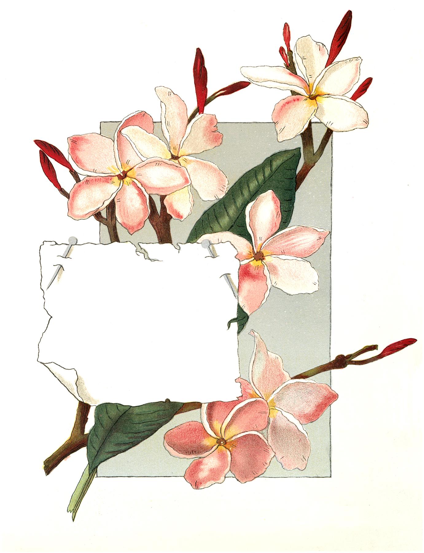 vintage pink Magnolia label