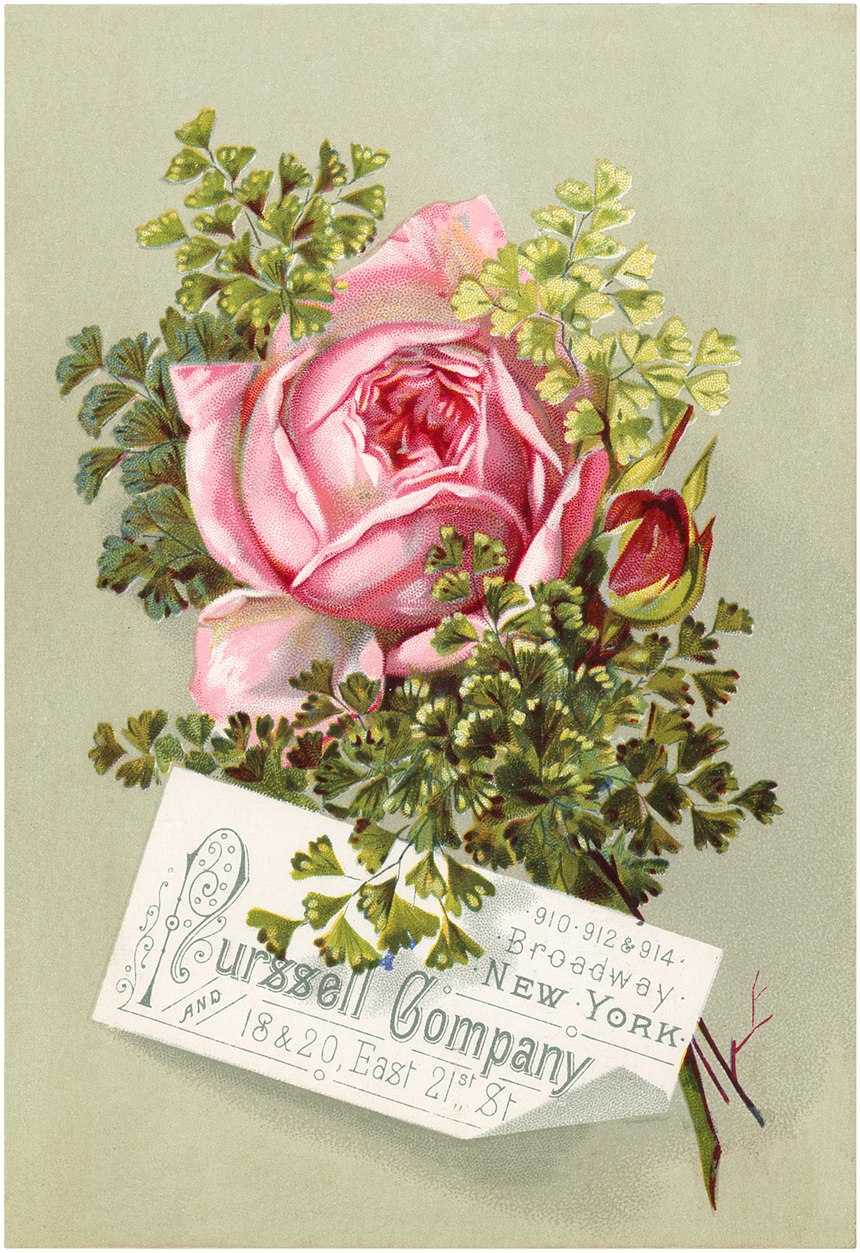 Beautiful Vintage Pink Rose Image The Graphics Fairy