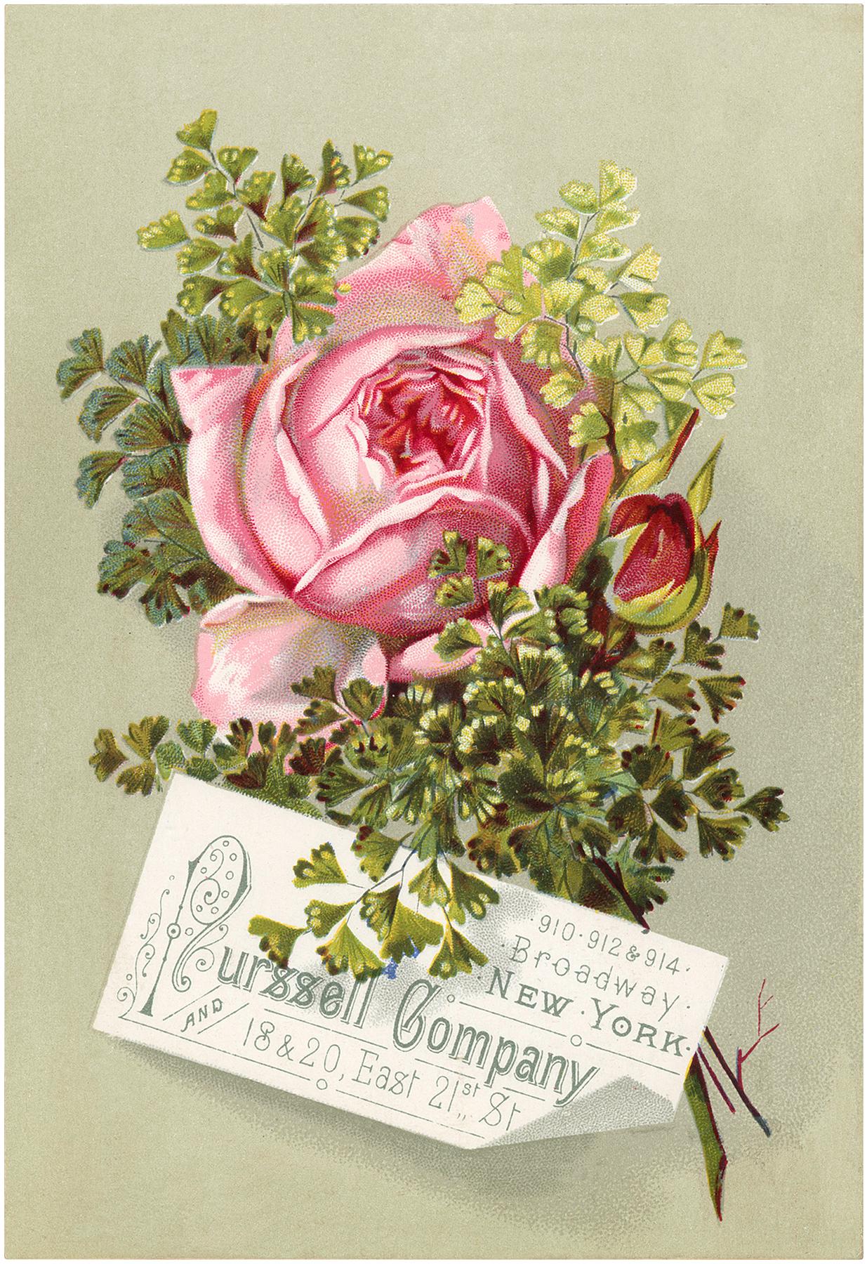 Vintage Pink Rose Image
