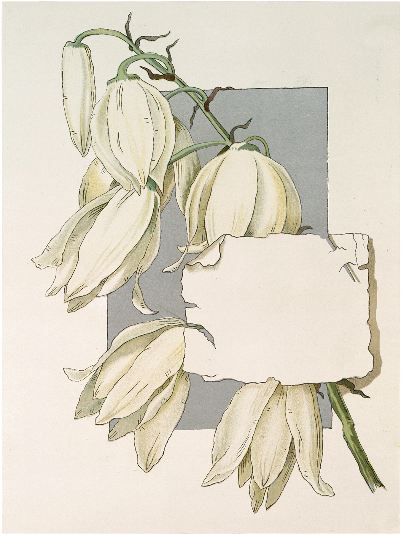 White Flowers Label Image