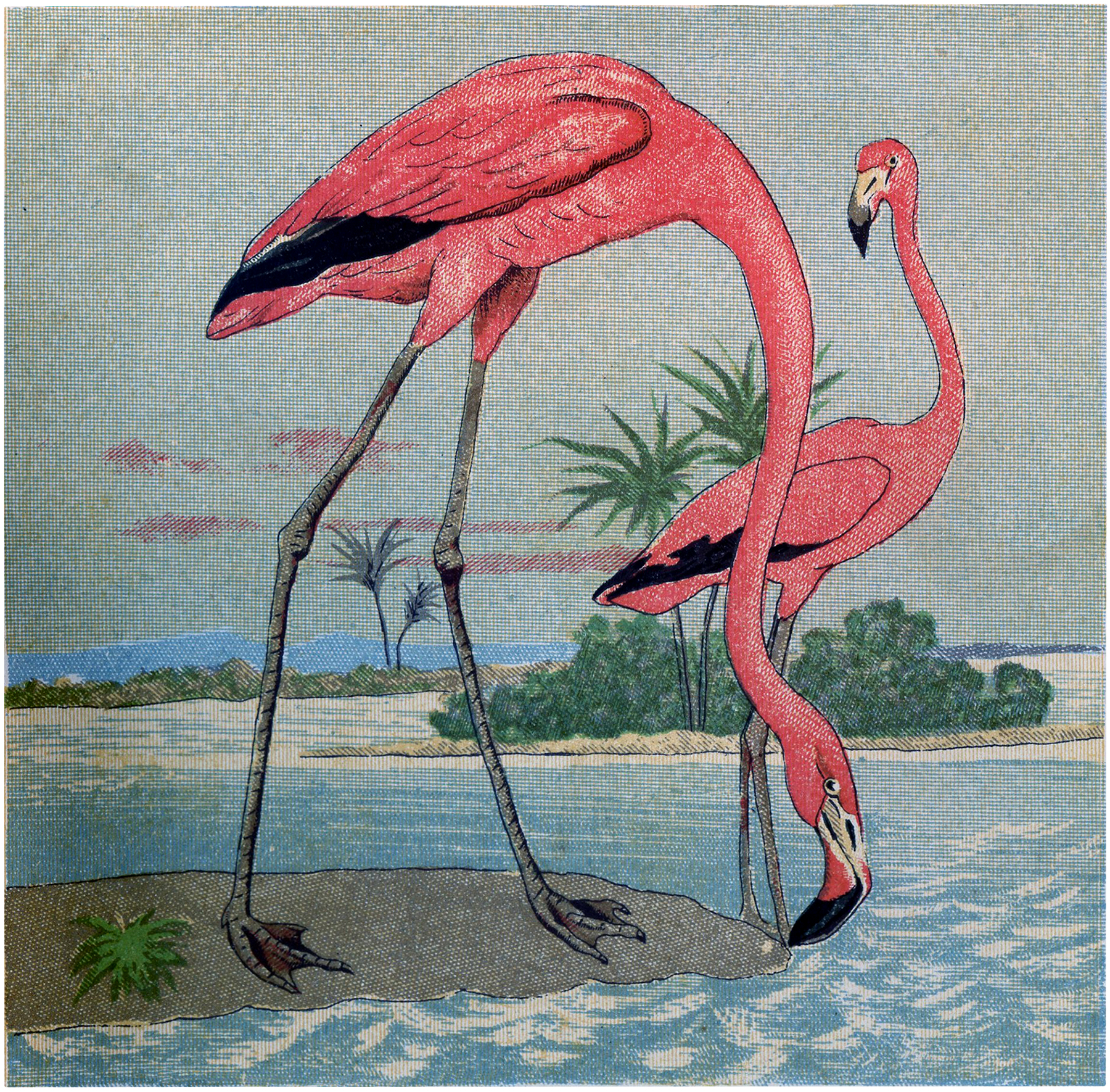Free Flamingo Image Download