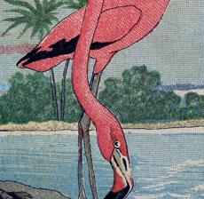 Free Flamingo Image Download!