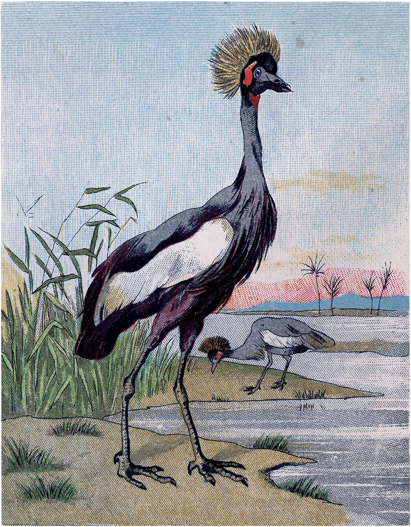 Interesting Bird Image
