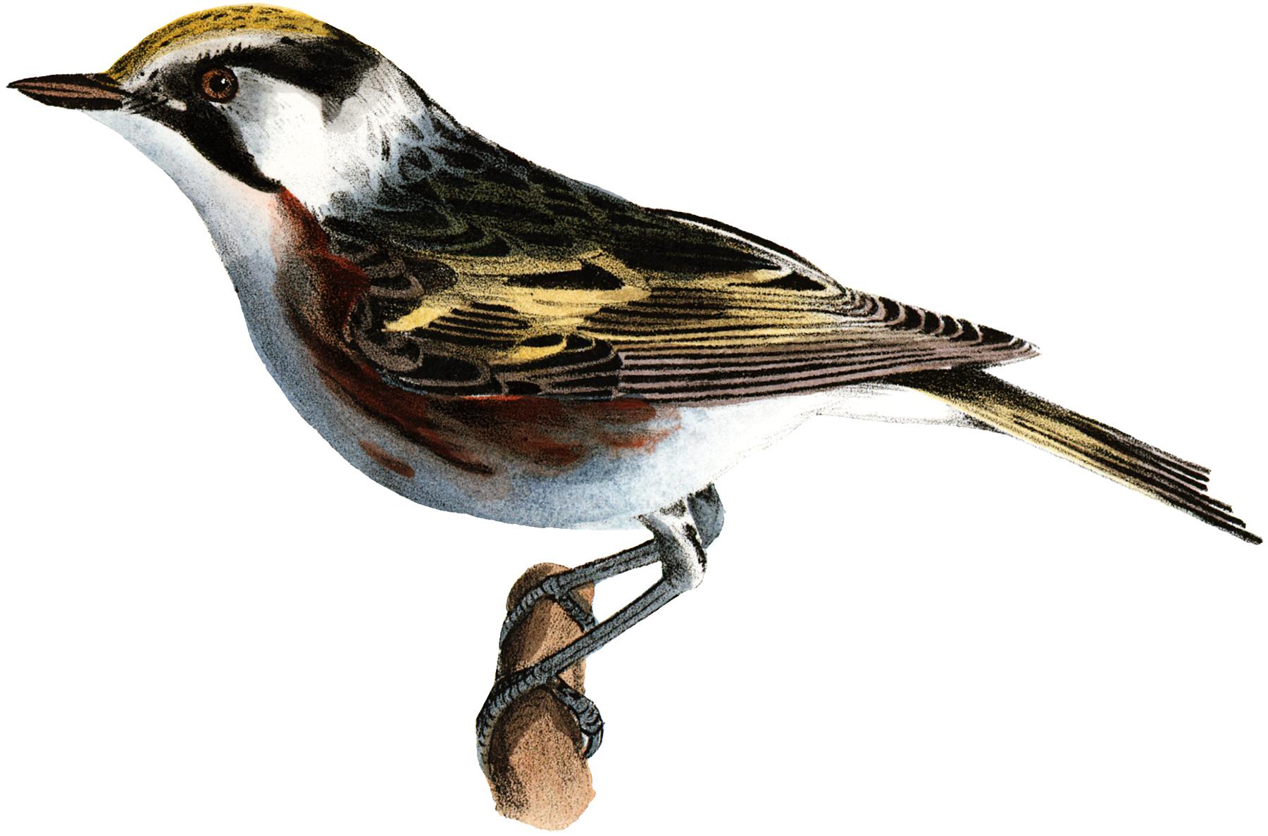 Lovely Little Bird Picture