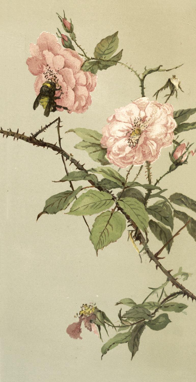 Gorgeous Vintage Bee On Flower image