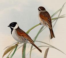Lovely Vintage Birds Image!