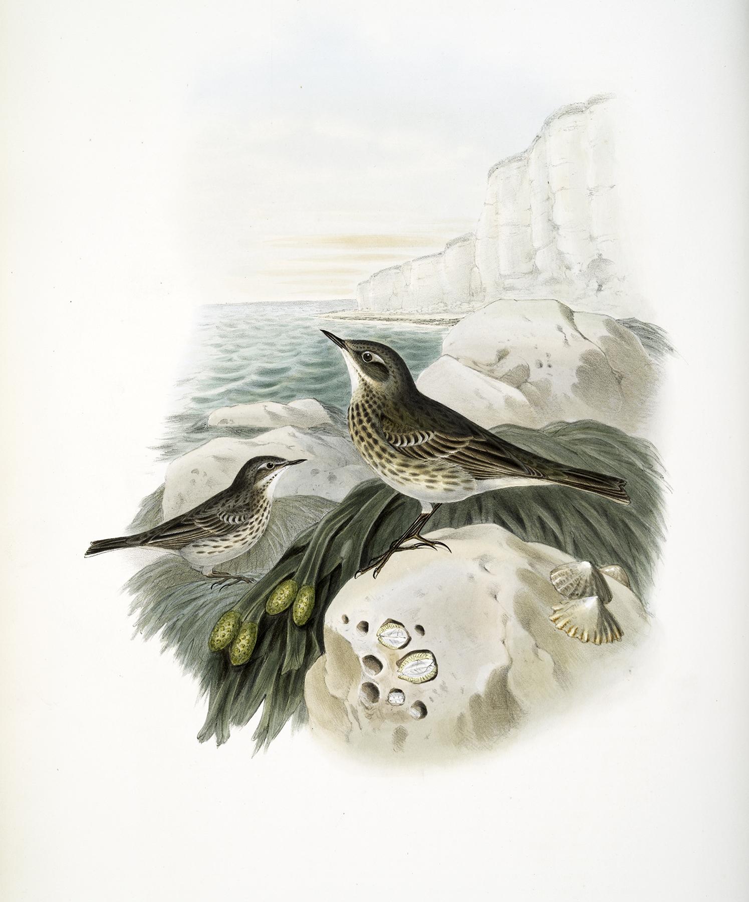 Lovely Vintage Birds Image