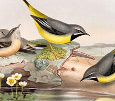 Vintage Birds On A Log Image!