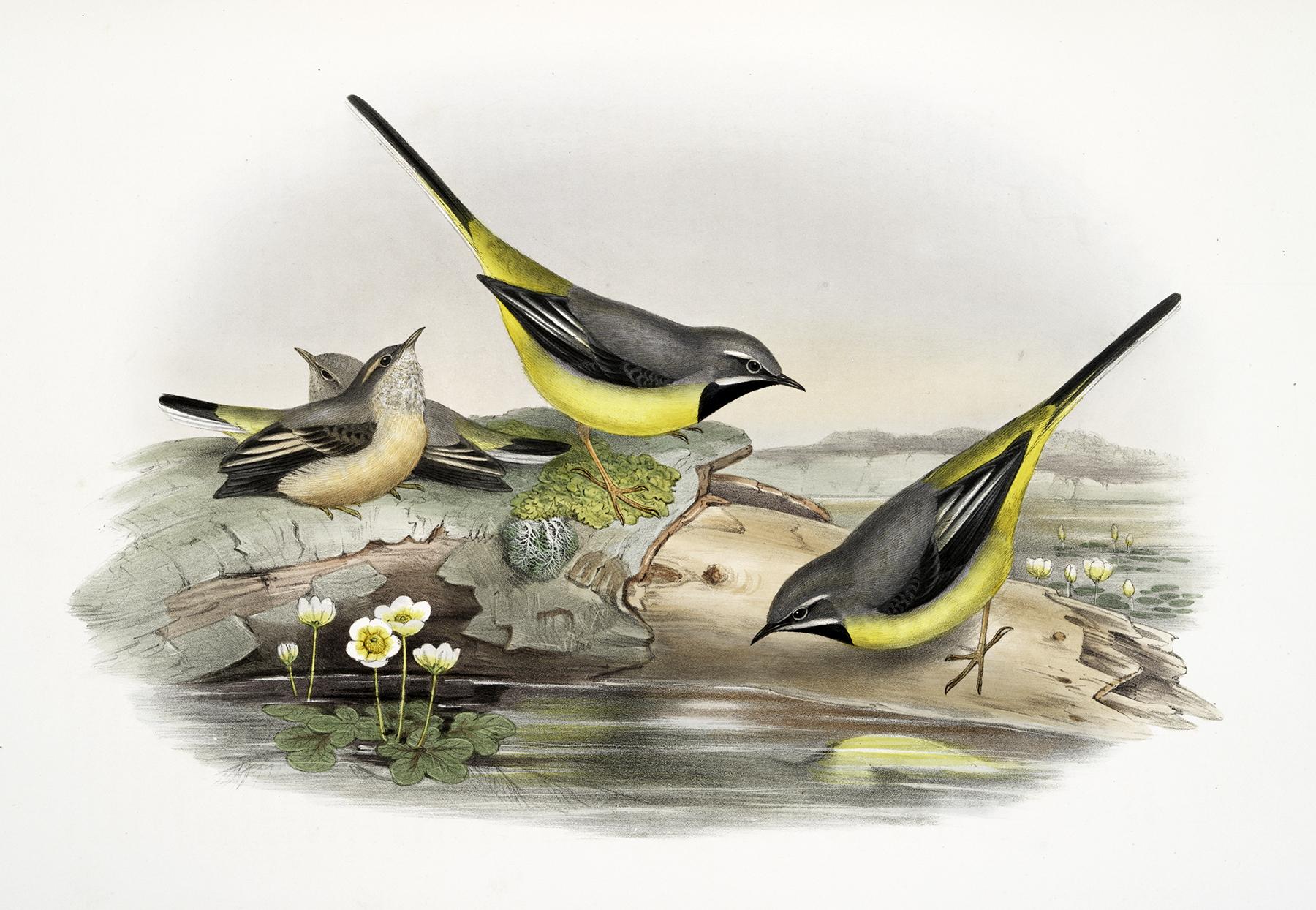 Vintage Birds On A Log Image