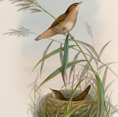 Super Pretty Vintage Birds with Nest Image!