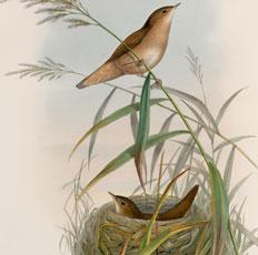 Super Pretty Vintage Birds with Nest Image!