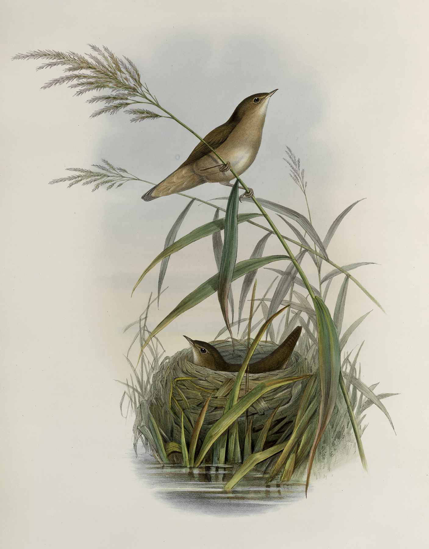 Beautiful Vintage Birds Image