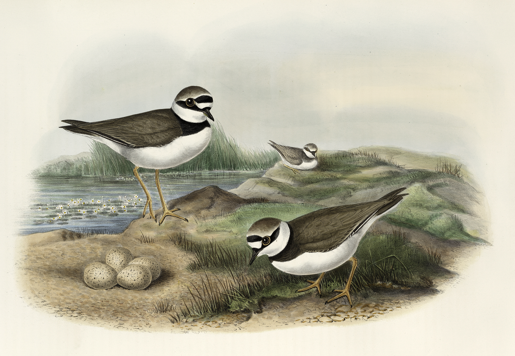 Vintage Birds With Eggs Image