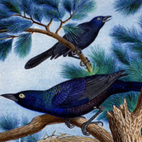 Vintage Blue bird of happiness image