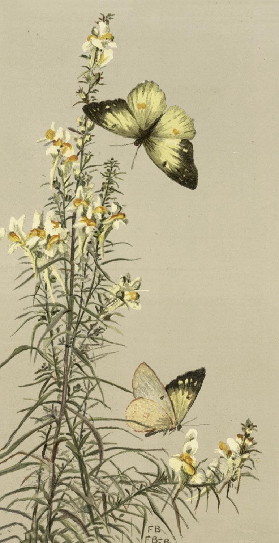 Beautiful Vintage Butterflies Image