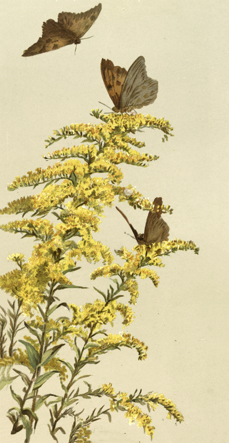 Vintage Moths and Yellow Flowers Image
