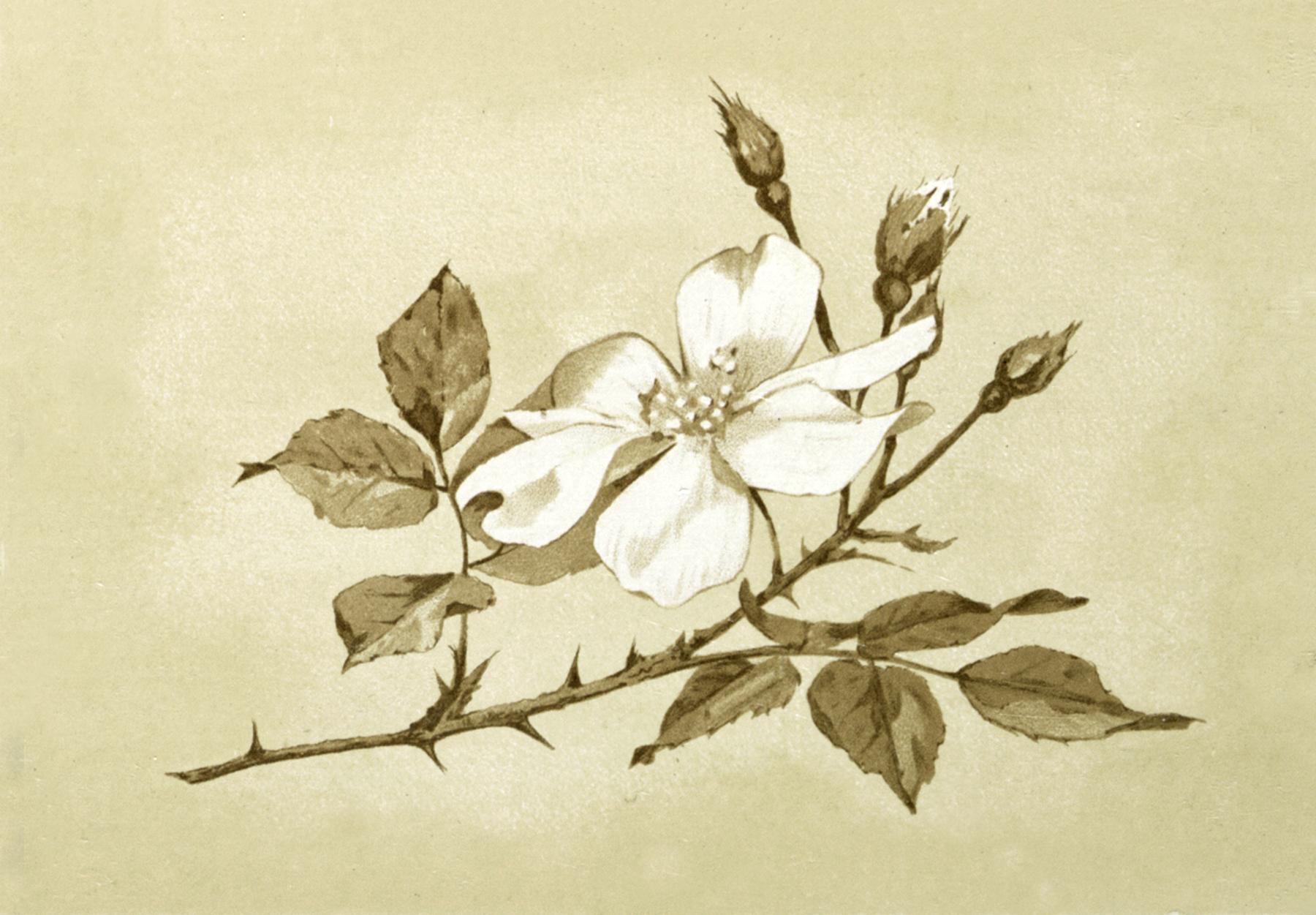 Pretty Vintage Flower Image