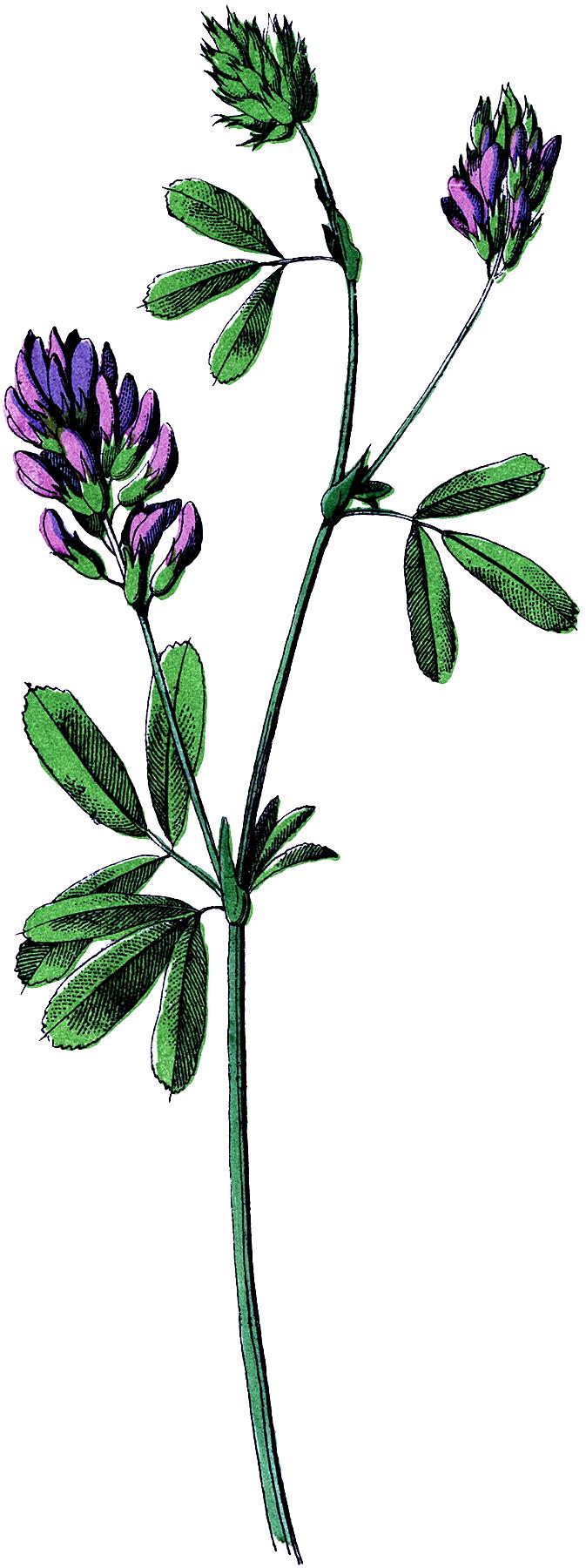 Vintage Purple Wildflower Image