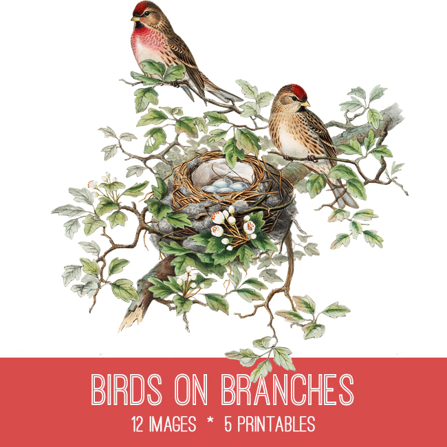 Birds on Branches Image Kit