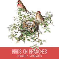 Birds on Branches Image Kit -Graphics Fairy Premium Membership!