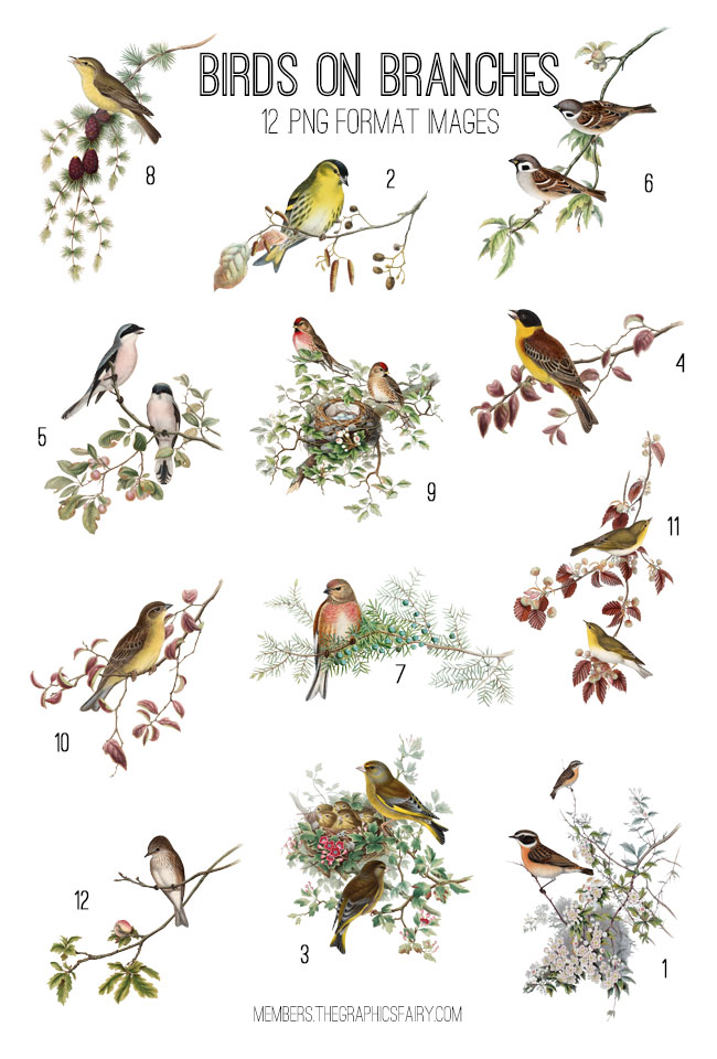 Vintage Birds on Branches Image Kit