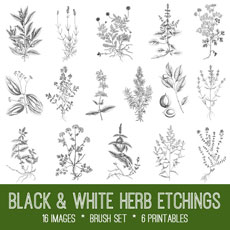 Vintage Herbs Image Kit – Graphics Fairy Premium Membership!