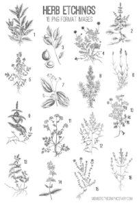 Vintage Herbs Image Kit