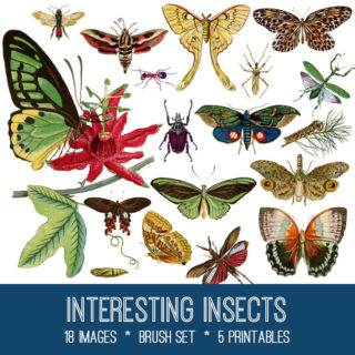 Interesting Insects Image Kit! Graphics Fairy Premium Membership