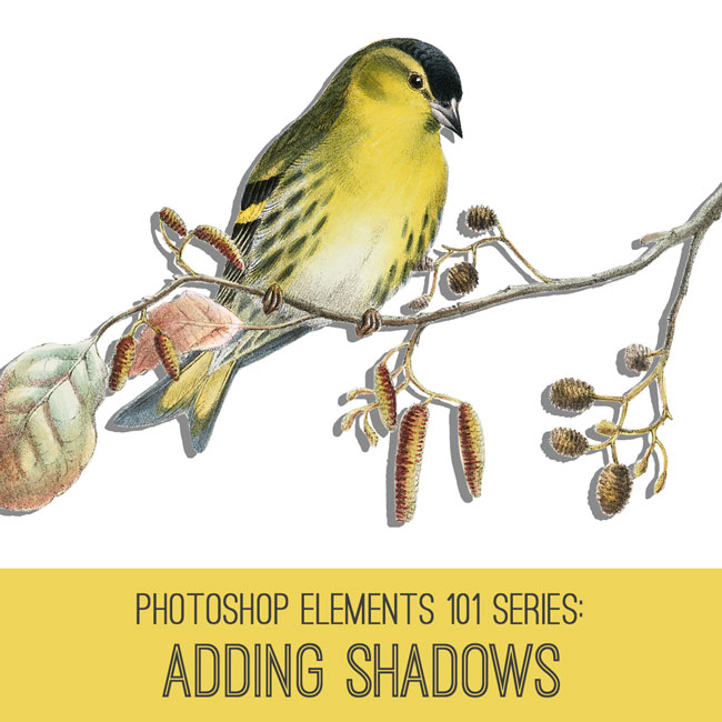 PSE How to Add Shadows Tutorial