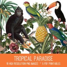 Tropical Paradise Kit Image! Graphics Fairy Premium Membership
