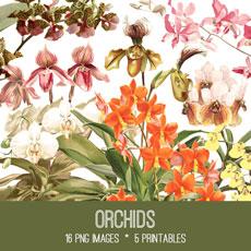 Orchids Image Kit! Graphics Fairy Premium Membership