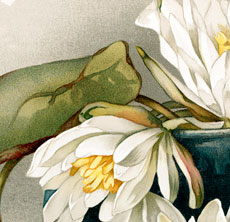 Stunning Vintage Water Lily Flowers Download!
