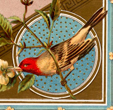 Vintage Red And Gold Bird Birthday Image!