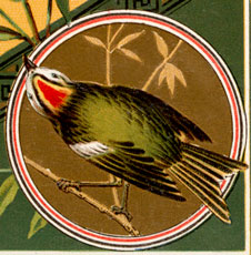 Vintage Green Bird On Branch Birthday Image!