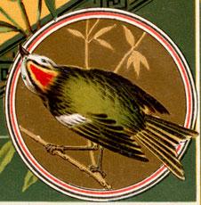 Vintage Green Bird On Branch Birthday Image!